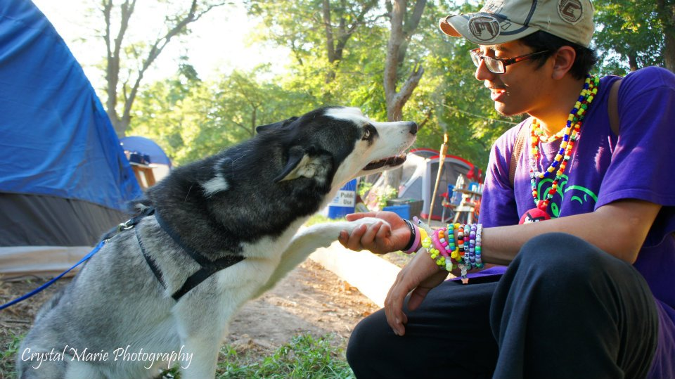 A dog and owner shake hands