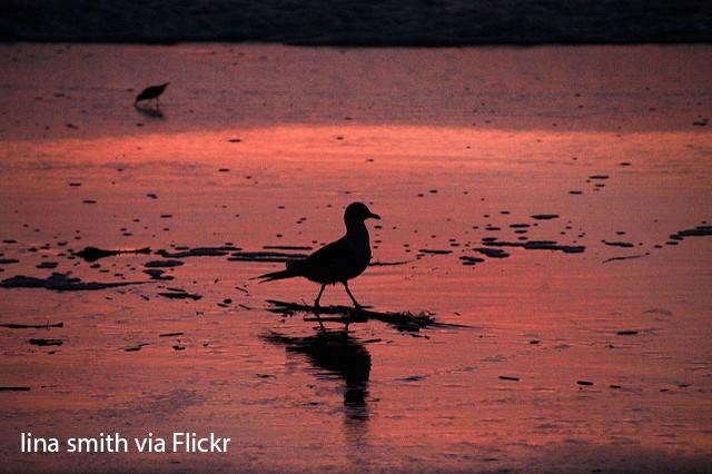 A seagull on the ocean
